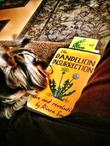 Luigi studies The Dandelion Insurrection. Thanks to Carol Ranellone of Taos, NM.