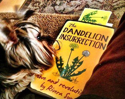 Luigi studies The Dandelion Insurrection. Thanks to Carol Ranellone of Taos, NM.