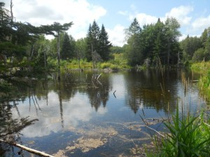 "A beaver pond at Skylandia Farm. Rivera Sun writes about ""Walking On the Edge"" of a beaver dam in her new book of poetry."