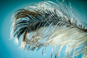pd-rivera-feather